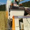 今年の新米、黄金色の田んぼからお届け!稲刈りのお話