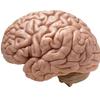 認知症ケアにおすすめの飲みものやサプリ、グッズを紹介