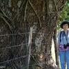 ベリーズ 巨木とカッコウやオリオール