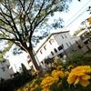 11月のねむの木の庭と池田山公園に行ってきました