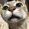 【猫ブログ】どあっぷ写真集 ポッキー・たかし編