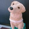盲導犬は大切なパートナー