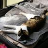 2003年8月22日 スーツケースの上は無法地帯