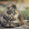 猫が喧嘩で怪我をした時の対処法【仲裁・確認・病院】
