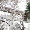 春のお花見散歩(4)(2017/4/5)