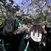 大きな桜の木の下で@大阪城公園