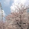 2017/4/6 ゾウガメが運動場に
