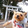トトロの入り口みたい!大島神社