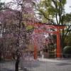 城南宮の梅や椿を撮ってきた@2020