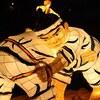大相撲、11月場所(九州場所)上位番付予想、大注目は阿武咲...