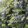 岩山に咲く花達