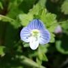 【ハマる】『植物に学ぶ生存戦略(NHK番組)』がより分かる、おすすめの本たちをご紹介