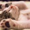 睡眠負債…これまで寝だめはできないものだと言われてきたが
