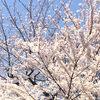 2020版:東京の花見ができるレストラン!ランチ・ディナー情報、桜が見える席確約プランあり