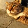 11月前半の #ねこ #cat #猫 その2