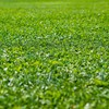 隣の芝生は「一生」青く見えるものなんだな