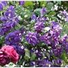 色とりどりの花が咲き乱れるお庭。夏のシシングハーストは訪れる価値ありです【ナショナル・トラスト】