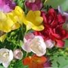 『花を ありがとうございます・・・』