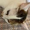 【臆病な猫】日々の生活と私の体験談⑮!!祝7歳!!