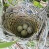 自分の家の庭に鳥が巣を作りました