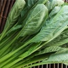 【小松菜徹底解析!】栄養価、美容効果、種類、旬の時期、選び方、保存方法は??
