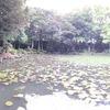 五島氏庭園 「心字が池」