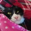 今日の黒猫モモ&白黒猫ナナの動画ー902