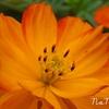 オレンジ色が好きなあなた、気になるあなたは。