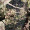 カンムリカイツブリ2羽・アカハラ・トラツグミ(大阪城野鳥探鳥20210206 6:30-12:40)