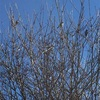 3羽の鳥達 ⁉︎