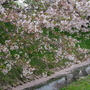 大沼親水公園の春 2