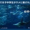 天草サメ害死事件で遊泳中の女子中学生が被害に。襲い来るシュモクザメの恐怖。