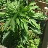 植物と人がともに元気だ、夏の前