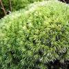 庭園によく使われる人気の苔8選