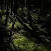2016年8月21日(日)開催  北八ヶ岳・苔と眺望の森トレッキング・レポート