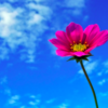 好きな花と花言葉を紹介