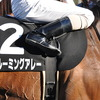 今日の競馬ニュースとか - 2011年1月28日