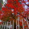 国立科学博物館附属自然教育園・松岡美術館中庭(港区白金台)