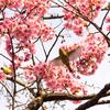 六本木でひと足早く春を感じてきた【2017.03.25】