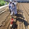 <農業講座日記> ニンジン2品種を種まき(8月6日)