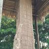 グアテマラ マヤ文明 キリグア遺跡観光