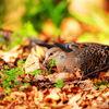 大阪城公園で見られる鳥類3種?