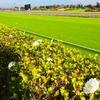 【京阪杯 2020予想】追い切り・ラップ適性 & 各馬評価まとめ / シャッフル、シャッフル〜な今年の1200m戦線の締め括り