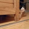 今日の黒猫モモ&白黒猫ナナの動画ー992