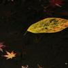 宇治市植物公園「小さい秋を求めて!」