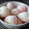 【白いイチゴ】冷凍の天使のいちご(エンジェルエイト)をお取り寄せした感想【食べチョク・佐賀県】