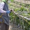 【日本は世界でもトップクラスに農薬を使う国だった!!!⑥】