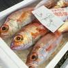 2017年10月10日 小浜漁港 お魚情報