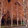 京都のイルミネーション2019、クリスマスにおすすめ6選!