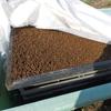 露地栽培実験ようやく発芽がそろいました